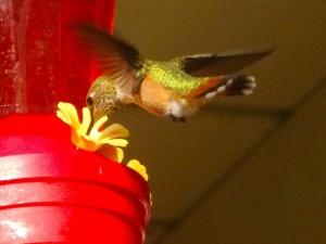 Hummingbirds have arrived.