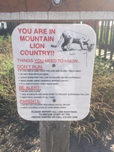 Today it's Mountain Lion country. No warning on feeding so I suppose it's ok.