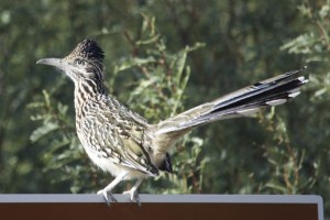 At last the Roadrunner photo. Now we have 80+ to sort.