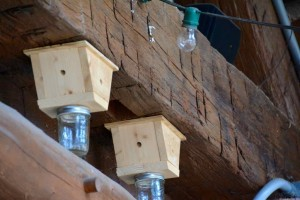 Carpenter Bee traps. In the spring you may think you've got dandruff as sawdust floats down on you as the Carpenter bees burrow into timber to lay their eggs.