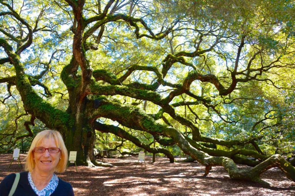 Angel Oak tree. No it's not an angel and oak tree.