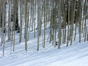 Love those Aspens in the sun and snow.