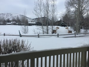 View from our lounge onto golf course and snowy bridge