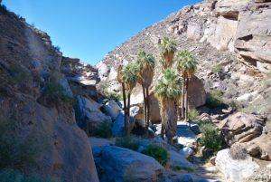 Palm canyon.
