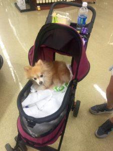 Disabled dog in supermarket.