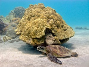 A turtle I didn't see.